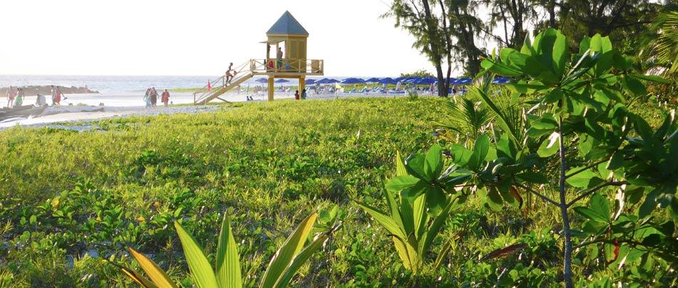 Green vegitation, next to the calm sea